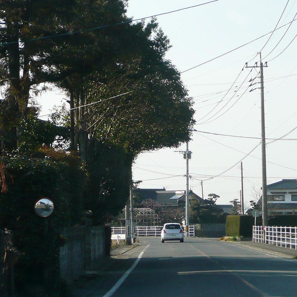 不思議な形の樹