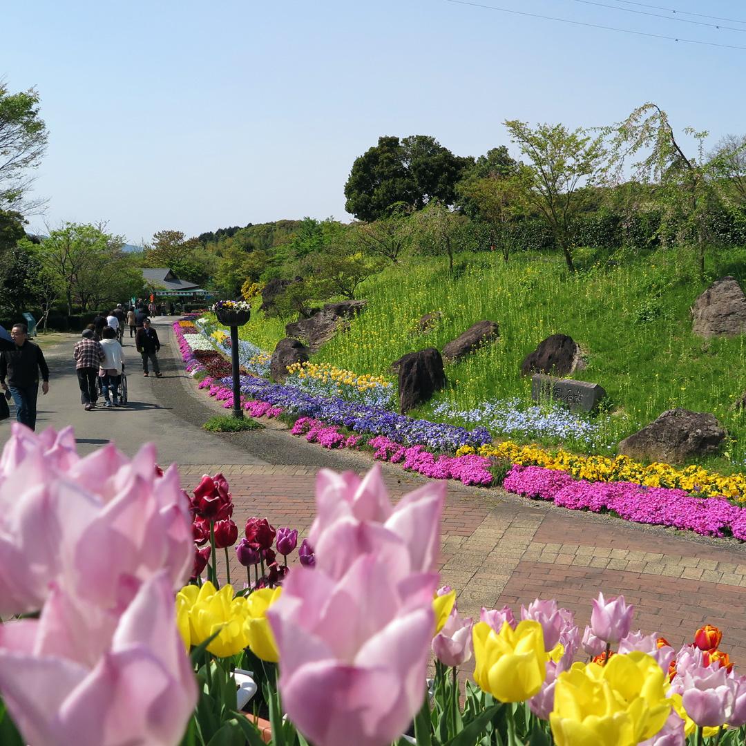 福地山ろく花公園 福岡県直方市
