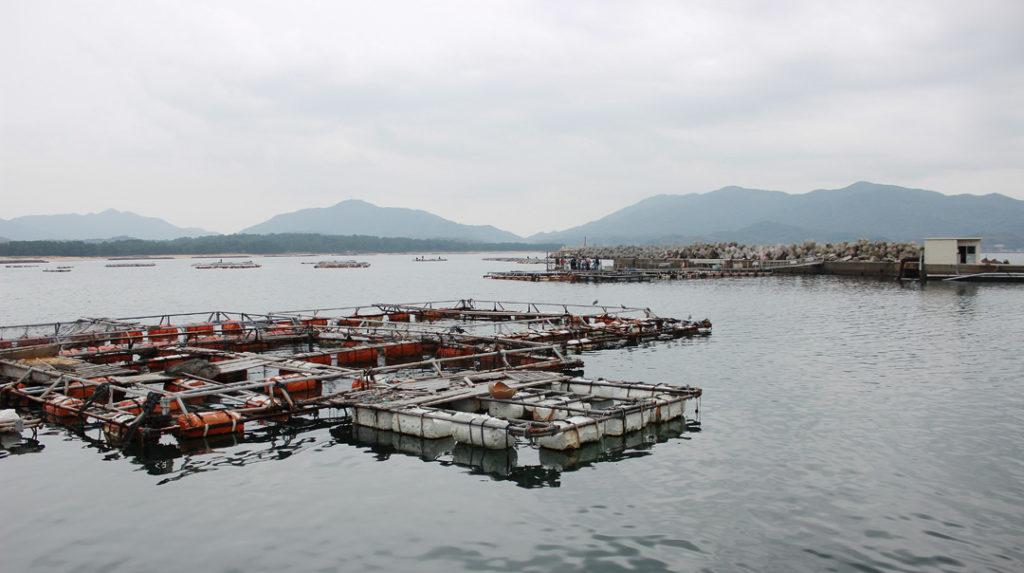 黒井漁業協同組合 観光釣堀